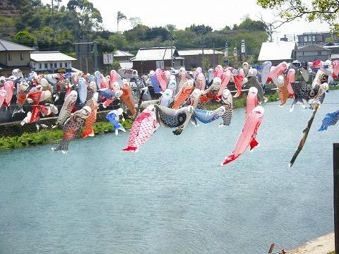 川上峡鯉のぼり